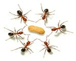 ant PEST CONTROL Blackburn