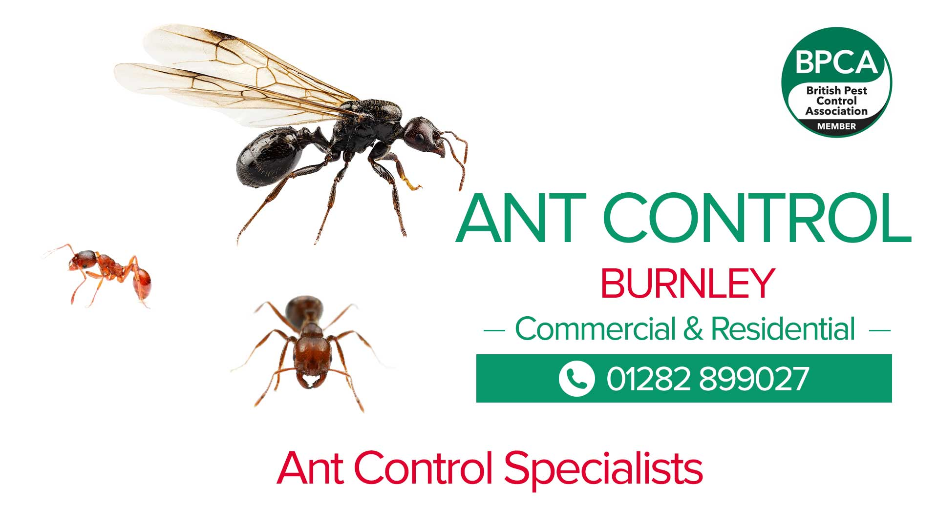 ant control burnley