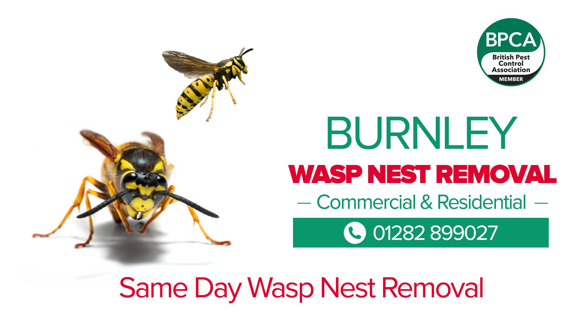 wasp nest removal burnley