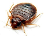 bed bug removal lancashire