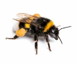 bee removal preston