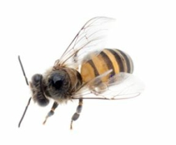 bee treatments preston