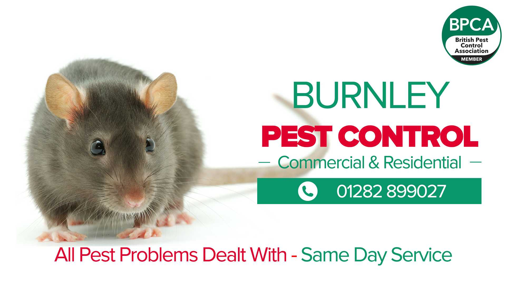 pest control burnley